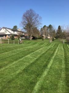 Lawn Stripes Toledo