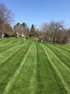 Stripes on Toledo Lawn