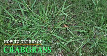 How to Get Rid of Crabgrass from your landscape